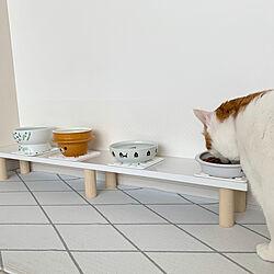 mt CASA/ごはん台/猫スペース/ねこのいる日常/猫と暮らす...などのインテリア実例 - 2020-06-04 11:15:50