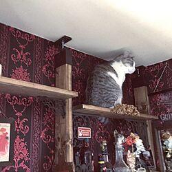 キッチン/猫/キャットウォークDIY/輸入壁紙/猫あるある...などのインテリア実例 - 2017-05-30 19:25:20