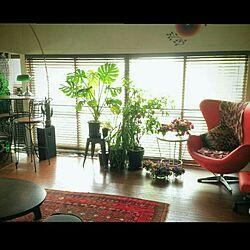リビング/ラグ/RC石川支部/以前の写真/ペルシャ絨毯...などのインテリア実例 - 2016-01-23 11:38:28