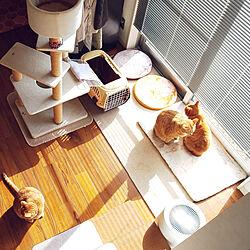 壁/天井/ねこのいる風景/キジトラ/猫と暮らす/猫...などのインテリア実例 - 2019-12-04 11:09:54