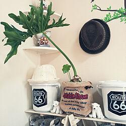 棚/賃貸DIY/3coins♡/100円SHOP/観葉植物...などのインテリア実例 - 2017-10-10 11:46:40
