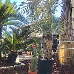 カリフォルニア/南国風/コンテナハウス/コーヒー樽/一から庭作り...などのインテリア実例 - 2019-04-04 18:05:41