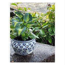 陶器/雨ふり/植物のある暮らし/逢/春...などのインテリア実例 - 2021-05-05 07:32:20