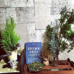 玄関/入り口/男前/古い家/コンクリート風壁紙/植物のある暮らし...などのインテリア実例 - 2018-11-30 08:48:33