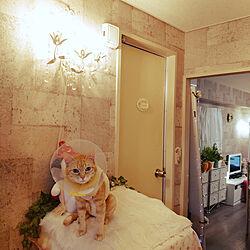 部屋全体/猫/ねこが好き/昭和の家/ねことここちよく暮らす...などのインテリア実例 - 2020-03-25 01:02:21