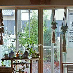 リビング/GREENのある暮らし/てまり草/エバーフレッシュ/サボテン...などのインテリア実例 - 2015-07-17 20:34:15