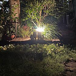 夜の庭/ヒトツバシダ/タカショー ガーデンライト/タカショー/ドウダンツツジ...などのインテリア実例 - 2021-07-30 06:14:03