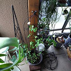 玄関/入り口/マンション/マンション暮らし/中庭ベランダ/植物のある暮らし...などのインテリア実例 - 2021-06-16 15:45:19