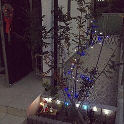 玄関/入り口/シマトネリコ/シンボルツリー/玄関アプローチ/玄関ドア...などのインテリア実例 - 2016-11-17 19:23:28