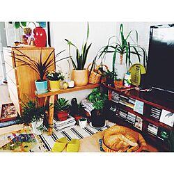 リビング/植物/アンティーク/多肉植物/賃貸...などのインテリア実例 - 2015-07-04 15:33:30