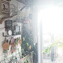 机/indoor green/植物と暮らす/DIY/マンション...などのインテリア実例 - 2019-08-03 07:42:15