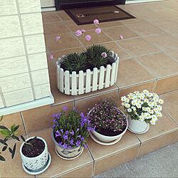 お花のある暮らし/癒しの時間/オリーブの木/ピンクかすみ草/ベルフラワー...などのインテリア実例 - 2021-04-26 19:30:26