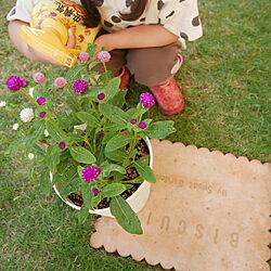 ガーデニング/植物のある暮らし/害虫対策/アースガーデン/ロハピ...などのインテリア実例 - 2020-06-07 23:54:58