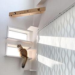 小窓のある部屋/小窓/猫と暮らす/猫と暮らす家/猫と暮らす生活...などのインテリア実例 - 2020-10-29 22:22:54
