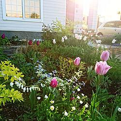 玄関/入り口/花のある暮らし/備忘録/4年目の庭/葉色を楽しむガーデニング...などのインテリア実例 - 2020-05-21 17:36:09
