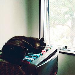 キッチン/保護猫/ねこのいる日常のインテリア実例 - 2020-06-27 21:39:27