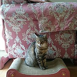部屋全体/ねこと暮らす。/老猫/猫/ねこ...などのインテリア実例 - 2018-09-12 09:21:33