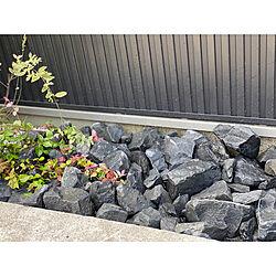 ブラックロック/ロックガーデン/花壇/DIY/玄関/入り口のインテリア実例 - 2020-07-04 11:31:30