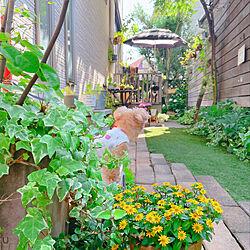 犬と暮らす/わんこと暮らす家/植物のある暮らし/グリーンのある暮らし/おうち時間...などのインテリア実例 - 2021-06-09 20:18:34