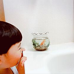 子供のほっぺたたまらん♡/金魚鉢/生きものを大切にしよう/金魚飼い始めました♡/金魚...などのインテリア実例 - 2021-03-28 14:05:01