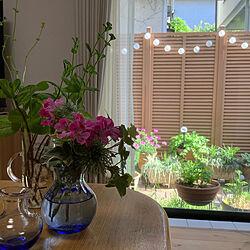 IKEA/ハーブ/庭の花/ガーデニング/節約...などのインテリア実例 - 2021-05-06 15:24:37