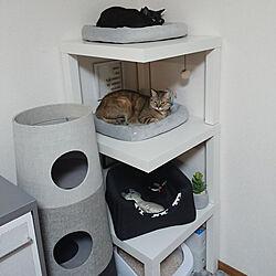 リビング/猫スペース/モノトーンインテリア/ねこと暮らす/猫...などのインテリア実例 - 2020-04-30 15:41:22