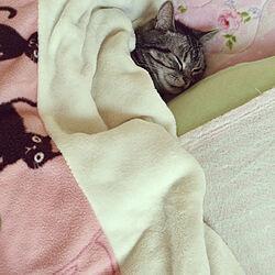 猫との生活/昭和のお家/猫ちゃんばかりでごめんなさい/ベッド周りのインテリア実例 - 2020-10-21 09:08:53