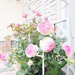 玄関/入り口/バラ/おうち時間を楽しむ/アイアン雑貨/お花のある暮らし...などのインテリア実例 - 2021-05-12 13:29:05