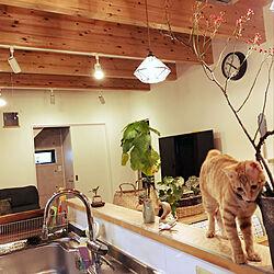 キッチン/今日は雨/水切りラック/猫のいる暮らしのインテリア実例 - 2018-10-11 10:40:47