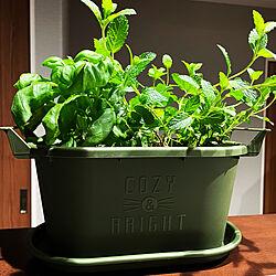 ハーブのある暮らし/観葉植物/キッチンのインテリア実例 - 2021-05-23 02:03:39
