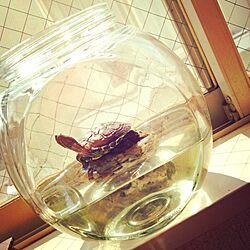 机/亀のインテリア実例 - 2013-10-30 11:44:29