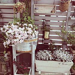 壁/天井/ヒナソウ/植物/DIY/ベランダガーデン...などのインテリア実例 - 2013-03-24 16:26:40