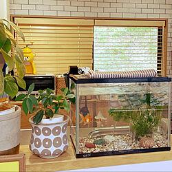 金魚/北欧/シンプルインテリア/シンプル可愛いが好き/狭小住宅...などのインテリア実例 - 2021-07-14 19:39:33
