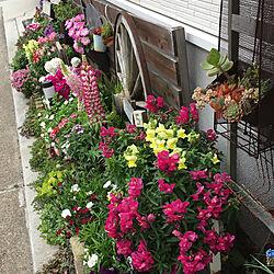 花のある暮らし/建売住宅/古道具/花壇/小さい庭...などのインテリア実例 - 2020-04-01 19:05:50