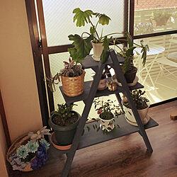 2018.4.21☀️/ラダーシェルフDIY/窓辺のグリーン/観葉植物のある部屋/じつは和室...などのインテリア実例 - 2018-04-21 09:09:15