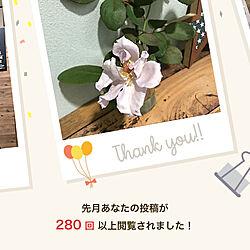 薔薇初心者/初めての薔薇/コレ、DIYしたよ!/観葉植物/薔薇が好き...などのインテリア実例 - 2021-09-21 22:32:33