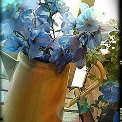 Flowersのインテリア実例 - 2013-06-22 19:07:52