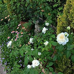 玄関/入り口/夏の記録/庭づくり/鉢植え/花壇...などのインテリア実例 - 2021-08-06 06:34:10