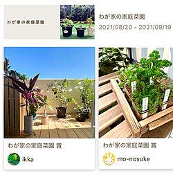 ベランダガーデン/わが家の家庭菜園/イベント受賞/IKEA/植物のある暮らし...などのインテリア実例 - 2021-10-02 01:12:44