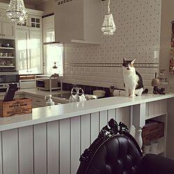 キッチン/イギリスのタイル/猫のいる日常のインテリア実例 - 2016-01-22 16:36:19