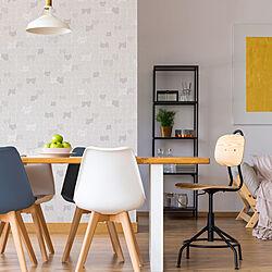 DIY/猫柄の壁紙/明和グラビア/壁紙/壁紙シート...などのインテリア実例 - 2021-09-30 14:52:06