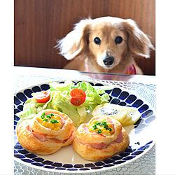 ダックスフンド/犬のいる暮らし/アラビア/パン/手作り...などのインテリア実例 - 2020-05-01 15:59:08