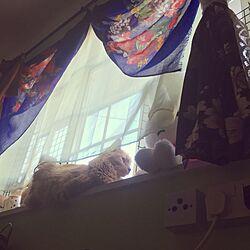 ベッド周り/ストール/きものカーテン/猫と暮らす。/麦たん...などのインテリア実例 - 2016-08-07 21:08:43