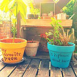 リビング/ペイント/手描き/植木鉢/ガーデニング...などのインテリア実例 - 2014-05-14 15:32:32