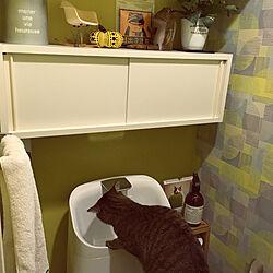 石膏ボード対応/ホチキスで付けられる家具/INAXのトイレ/トイレ/ベルメゾン...などのインテリア実例 - 2018-12-25 20:25:47