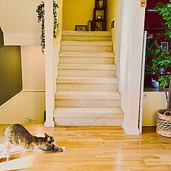 リビングイン階段/クレイジーキャッツ/ハッピーライフスタイル/猫のいる家/海外インテリア...などのインテリア実例 - 2020-02-23 06:57:44