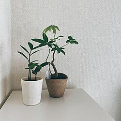 1K 1人暮らし/1k 6畳/観葉植物/一人暮らし/リビングのインテリア実例 - 2021-01-17 16:32:46