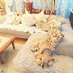 ニトリソファ/更年期/クッション衣替え/マンション暮らし/犬と暮らす...などのインテリア実例 - 2020-10-14 16:14:26