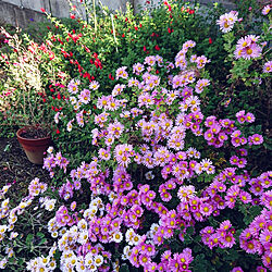 玄関/入り口/畑/癒し/楽しい時間/お花のある暮らし...などのインテリア実例 - 2020-11-15 16:48:37