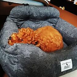 リビング/ペットインテリア/マンションインテリア/犬/犬のベッド...などのインテリア実例 - 2017-10-06 11:35:14